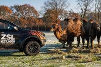 2020 Ford Ranger Raptors